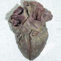 Serce Walniętego