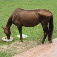 Chudy Koń