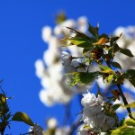 spring-time